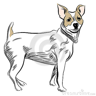 Parsons Jack Russell Terrier Dog