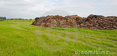 Part of dung heap in the field