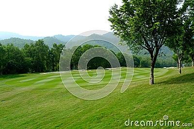 Part of golf field