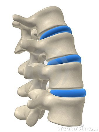 Free Part Of A Spine Stock Images - 2836044