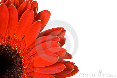 Part of red gerbera with blank place for your text