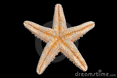 Parte inferior dos Starfish