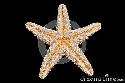 Parte inferiore delle stelle marine