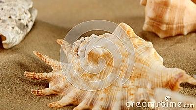 Parte superior da estrela do mar diferente do shellsand do mar na praia vídeos de arquivo