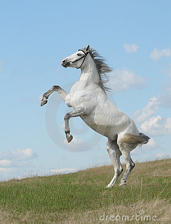 Partes posteriores grises del caballo