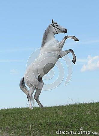 Partes posteriores grises del caballo en el prado