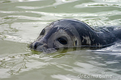 Partially submerged seal