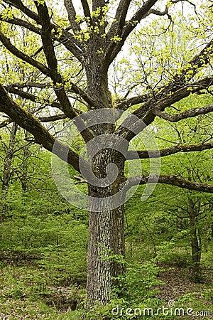 Particolare delle filiali di albero