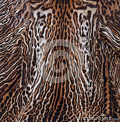 Struttura della pelle del leopardo