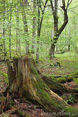 Partly declined stump