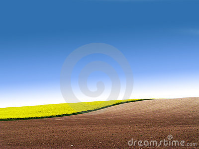 Partly ploughed field with rape
