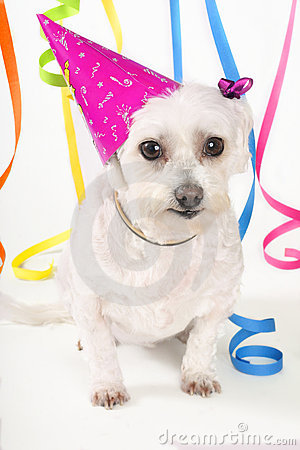 Free Party Pooch Stock Photo - 314560