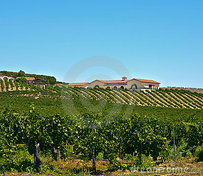 País de vinho, Califórnia do sul