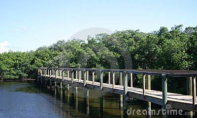 Paseo marítimo a través de los mangles