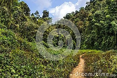 Passage in the Jungle