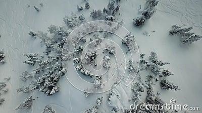 Passeio freerider do snowboarder do zangão da vista aérea na neve do pó filme