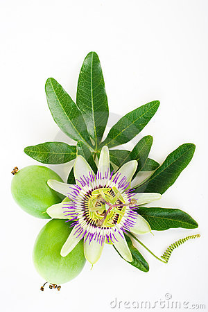 Free Passiflora Royalty Free Stock Photos - 6583928