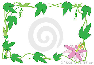Passiflora border