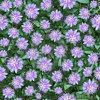 Passion flower seamlessly composable pattern
