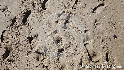 passos para a areia video estoque