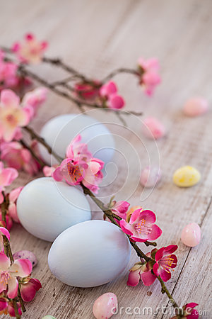 Pastel Blue colored Easter Eggs and jelly beans with Cherry Blos Stock Photo