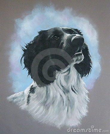 Pastel Painting of Spaniel Dog