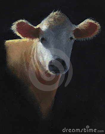 Pastel Painting of White Faced Cow