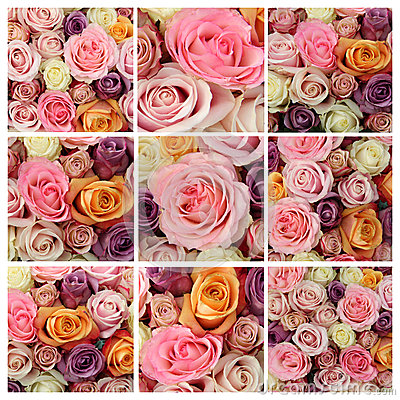 Pastel rose collage