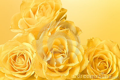 Pastel yellow roses with droplets background