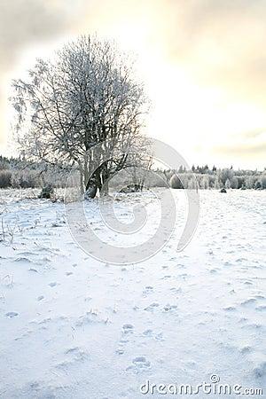 Pasterka village in snow – winter in Poland