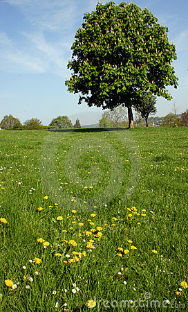 Free Pastoral Landscape Stock Image - 778461
