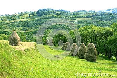Pastoral landscape (Maramures, Romania)