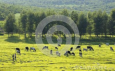 Pastoral scenery