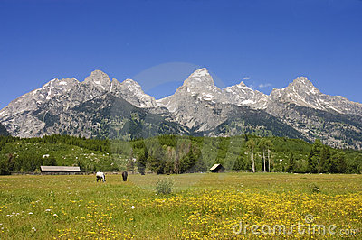 Pastoral sceni of the Tetons
