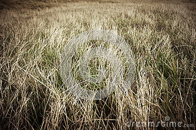 Pasture with dry grass