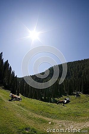 Pasture in Julian Alps