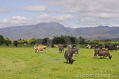 Pasture in sunshine