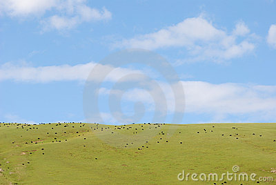 The pasture under blue sky