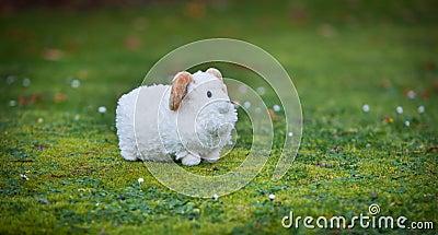 Pasturing sheep