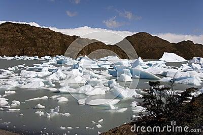 Patagonia - Largo Grey - Torres del Paine - Chile