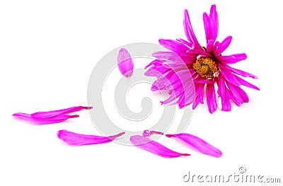 Patel s pink daisy frame