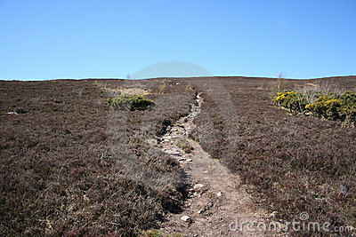 Path across moorland