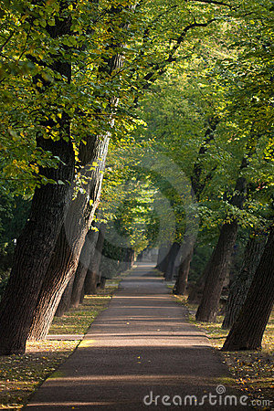 Path between alley of sloping trees