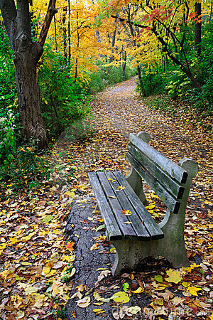 Free Path And Park Bench Stock Photo - 12921570