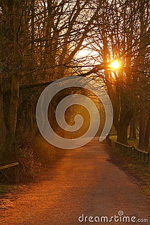 Free Path At Sunrise A Royalty Free Stock Photo - 30401795