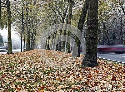 Path in autumn