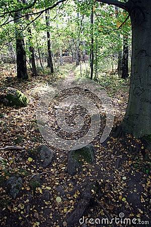 Path through autumn