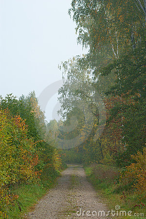 Path in an autumn forest
