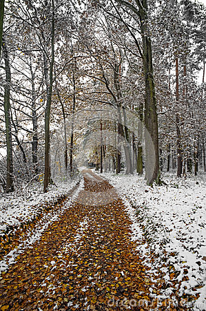 A path in an autumn forest