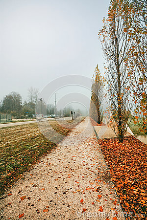 Path in the autumn park